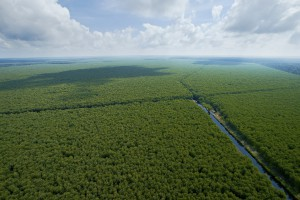 Inside RGE - Sustainable Plantation Forest (1) - Growth and Conservation