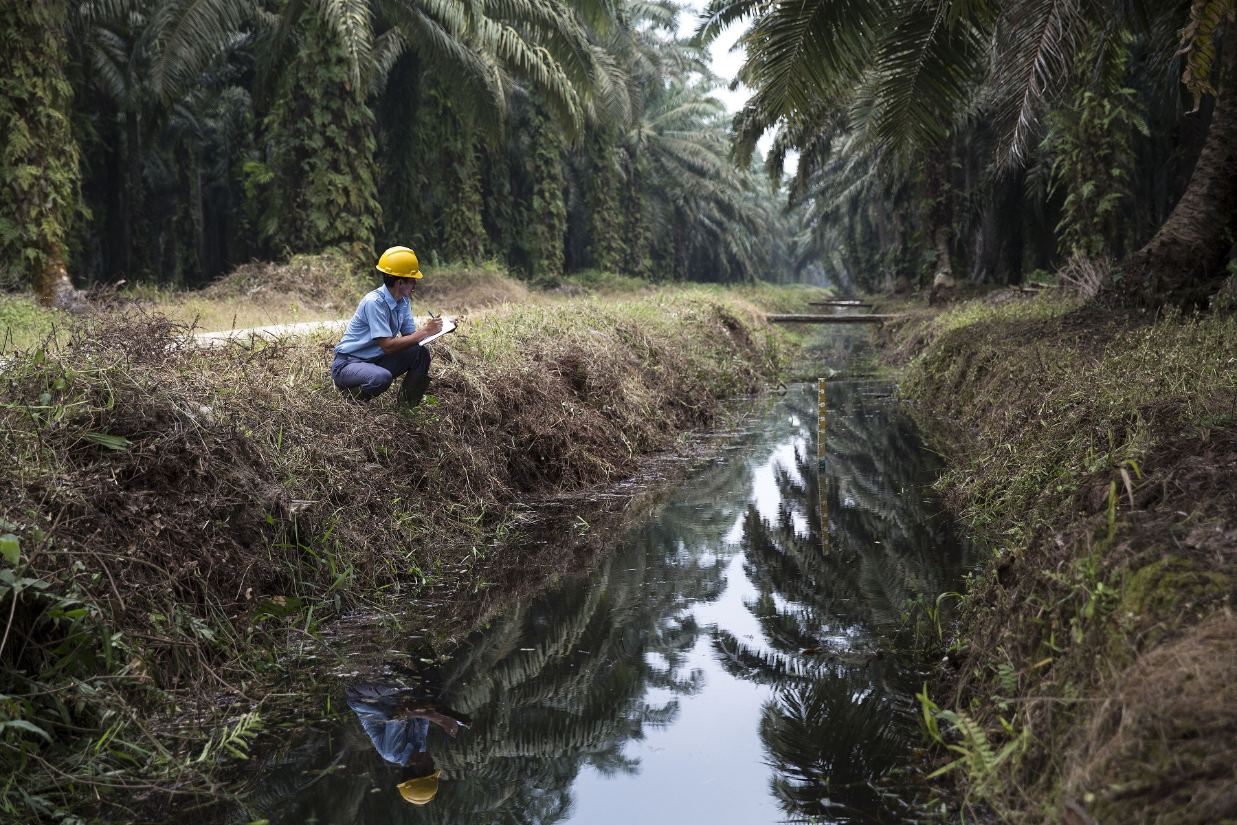 Water management in our palm oil estates