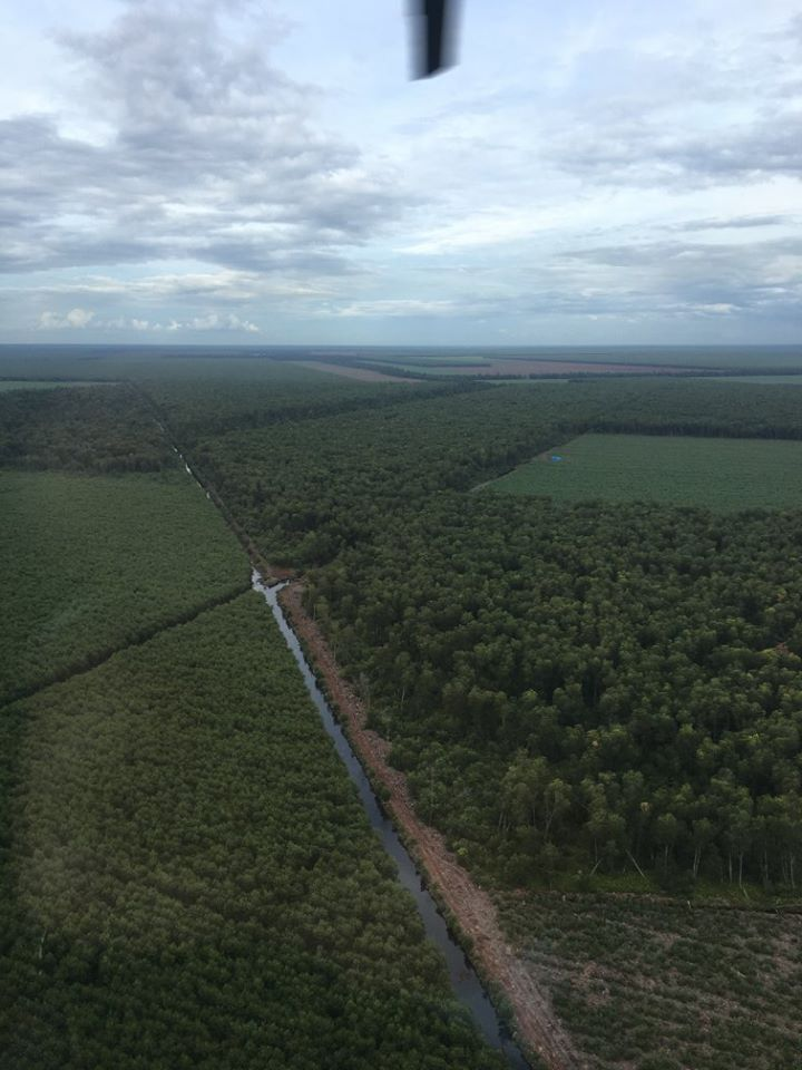 "APRIL implements ""ring plantations"" as a way to protect conservation forest from encroachment and degradation. An acacia plantation is established around the core conservation forest area, creating a buffer zone. This prevents illegal logging and human encroachment."