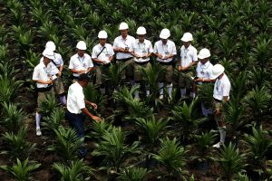 Palm oil production is a vital pillar of the Indonesian economy