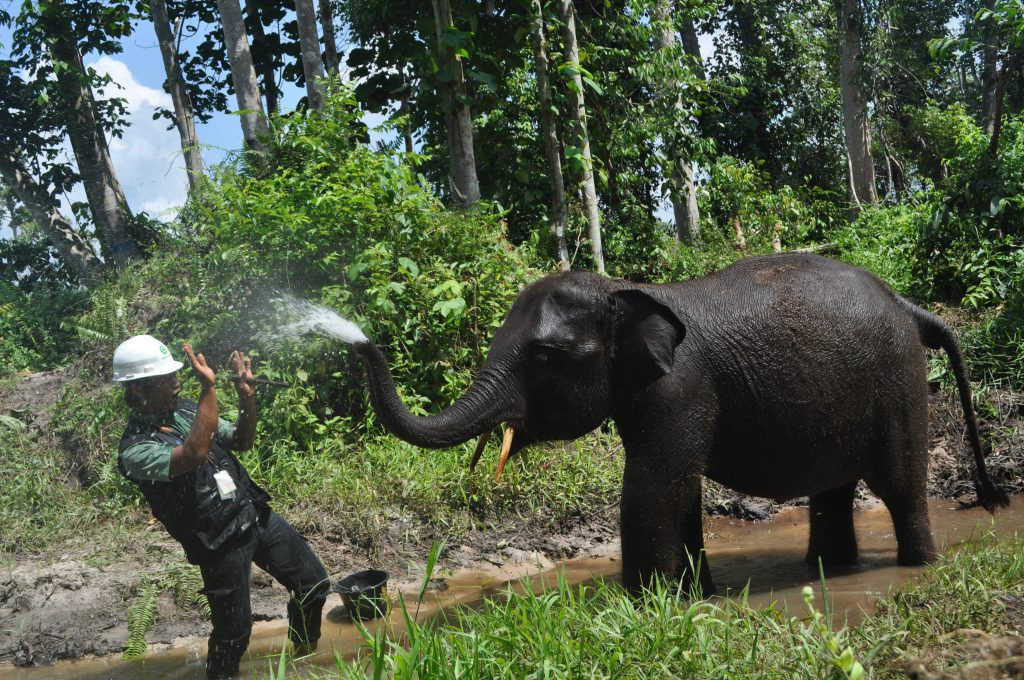 A splashing good time between an elephant trainer and one of the youngest members of APRIL's Elephant Flying Squad