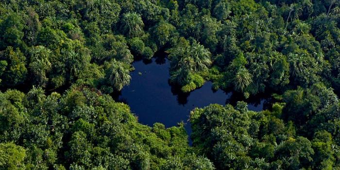 Restorasi Ekosistem Riau (RER) starts forest restoration exercise in Sumatra