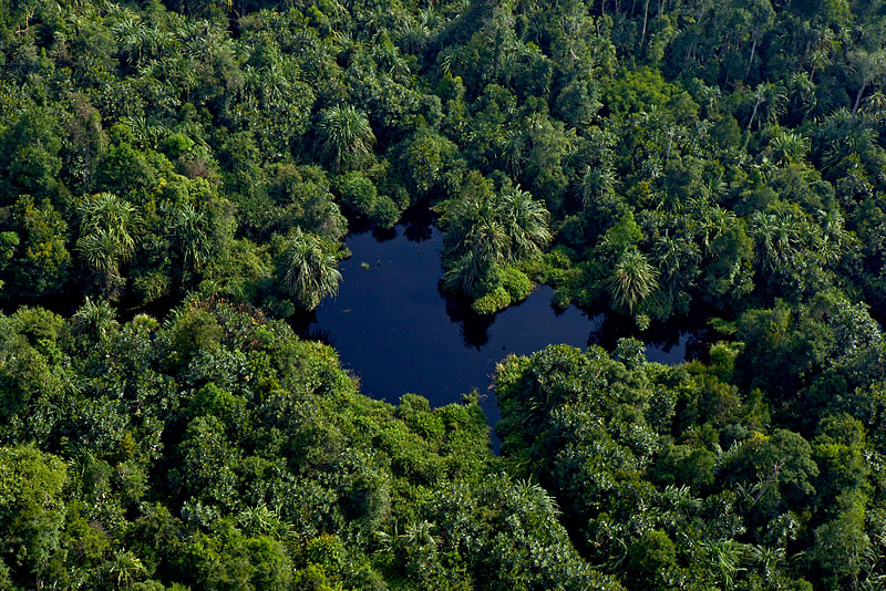 Restorasi Ekosistem Riau (RER)