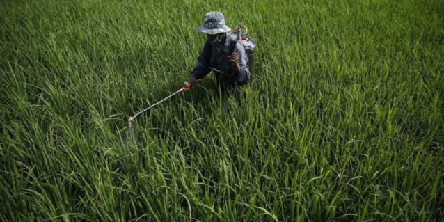 Why rural Indonesia is ripe for investment