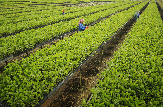 APRIL Group uses best practices, R&D and technology to cultivate quality seedlings.
