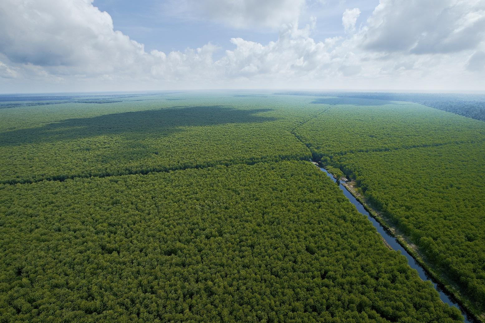 Inside RGE - Sustainable Plantation Forest (1)