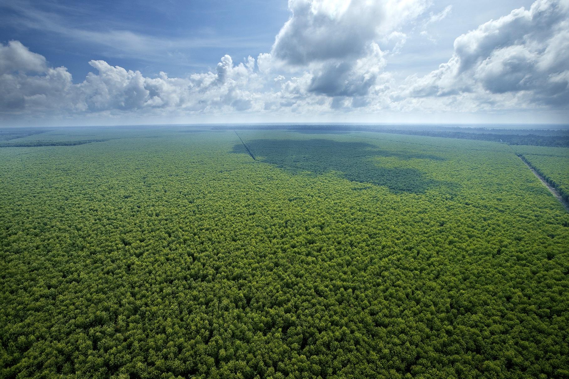 Inside RGE - Sustainable Plantation Forest (2)