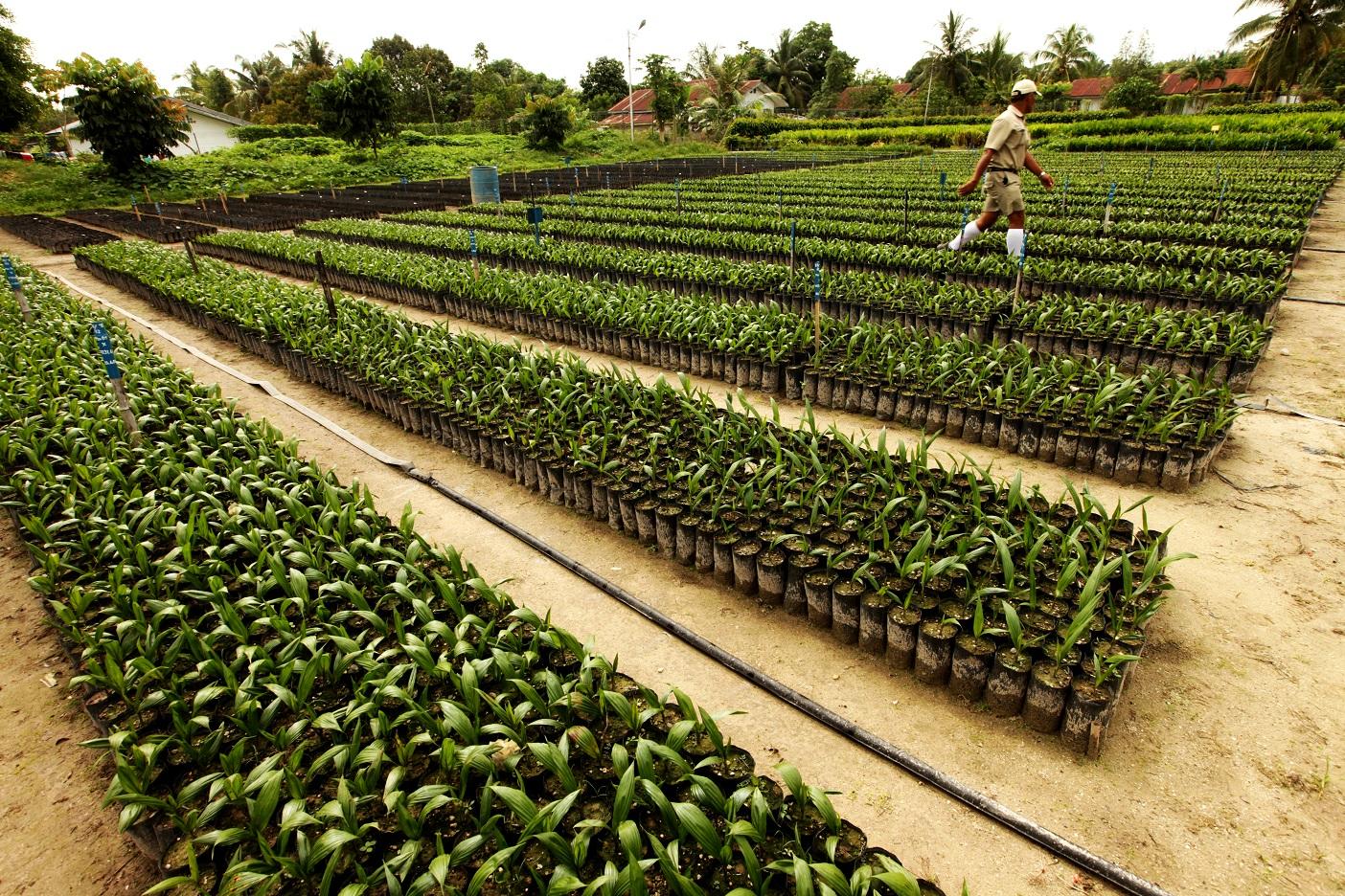 Topaz Seedlings