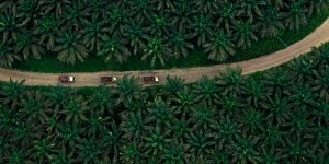Apical, one of the largest exporters of palm oil in Indonesia, has embedded sustainability into the core of its operations