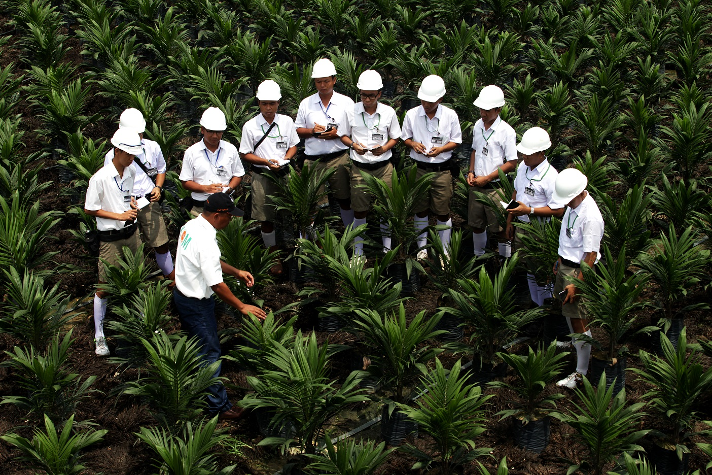 asian agri Indonesian giant asian agri adopts extended policy for helping to develop individual smallholders throughout the country jakarta, indonesia / accesswire / may 28, 2015 / asian agri announced that.