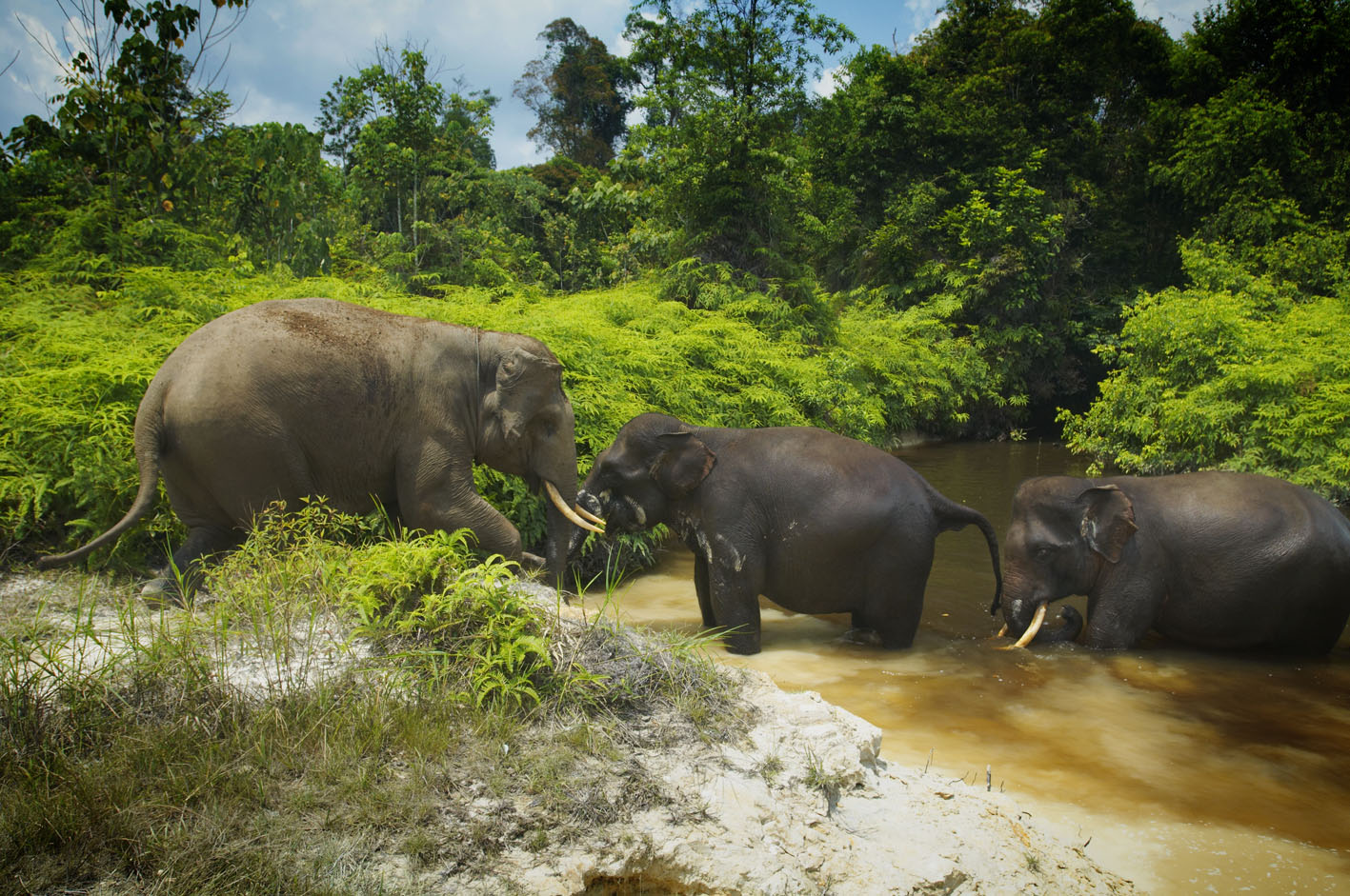 RAPP and Asian Agri's Efforts in Reducing Elephant-Human Conflicts Praised by World Wide Fund for Nature