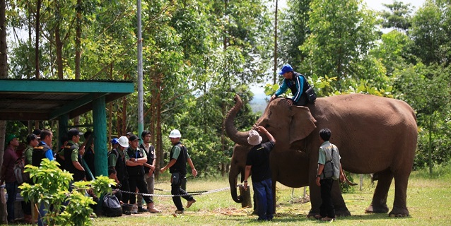 Efforts to Reduce Elephant-Human Conflicts Praised by World Wide Fund