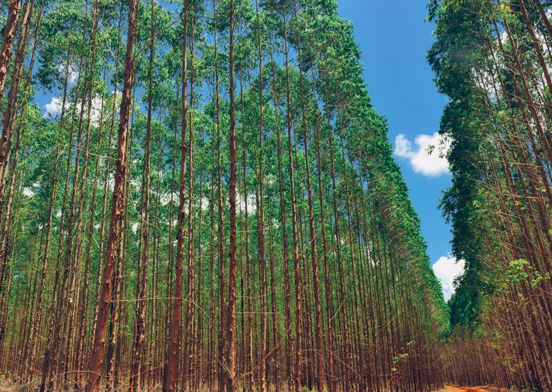 Sateri 2016 Sustainability Report