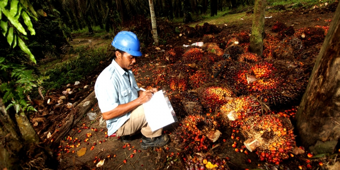 Asian Agri – Palm Oil Producers Sustainability Report Highlights Commitment to Engagement, Transparency and Traceability