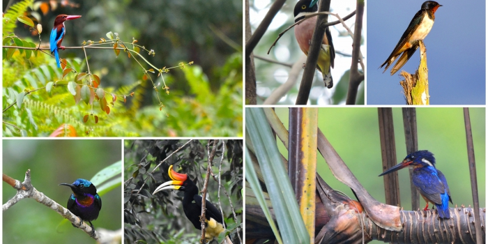 RER: Protecting and Documenting Endangered Bird Life in the Kampar Peninsula