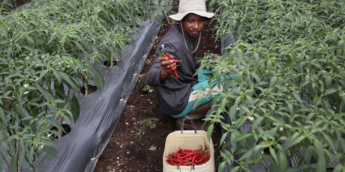 RER: Where Conservation and Chilli Farming Meet