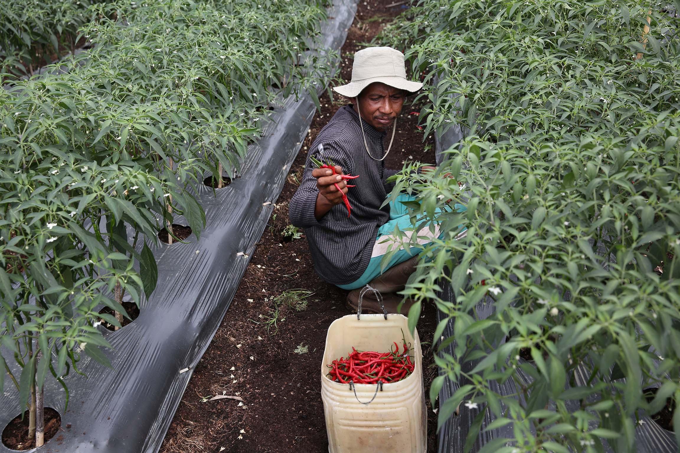 RER acok chilli farmer conservation