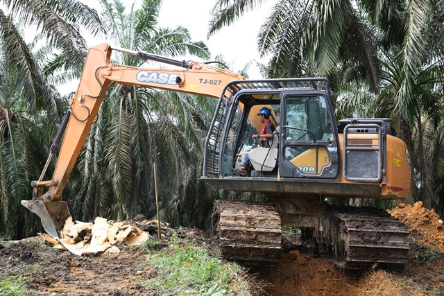 Asian Agri Palm Oil replanting