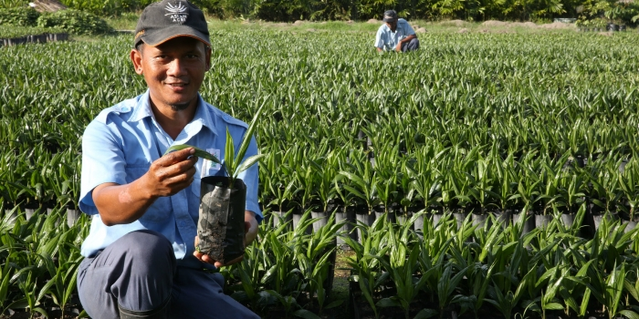 Asian Agri Helps Smallholders Replant, Provides Superior Topaz Oil Palm Seeds
