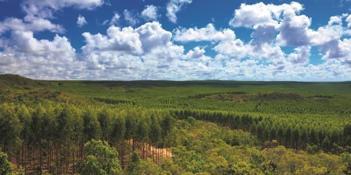 Sateri's Succession of Sustainability Milestones