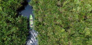 Riau Ecosystem Restoration Project
