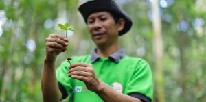 Riau Ecosystem Restoration Seedlings