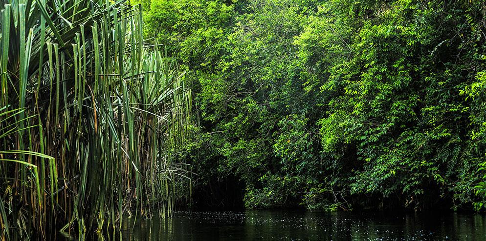 Riau Ecosystem Restoration