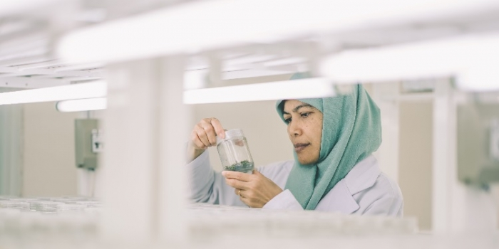 Culture of Innovation: APRIL Opens Kerinci Tissue Culture Lab
