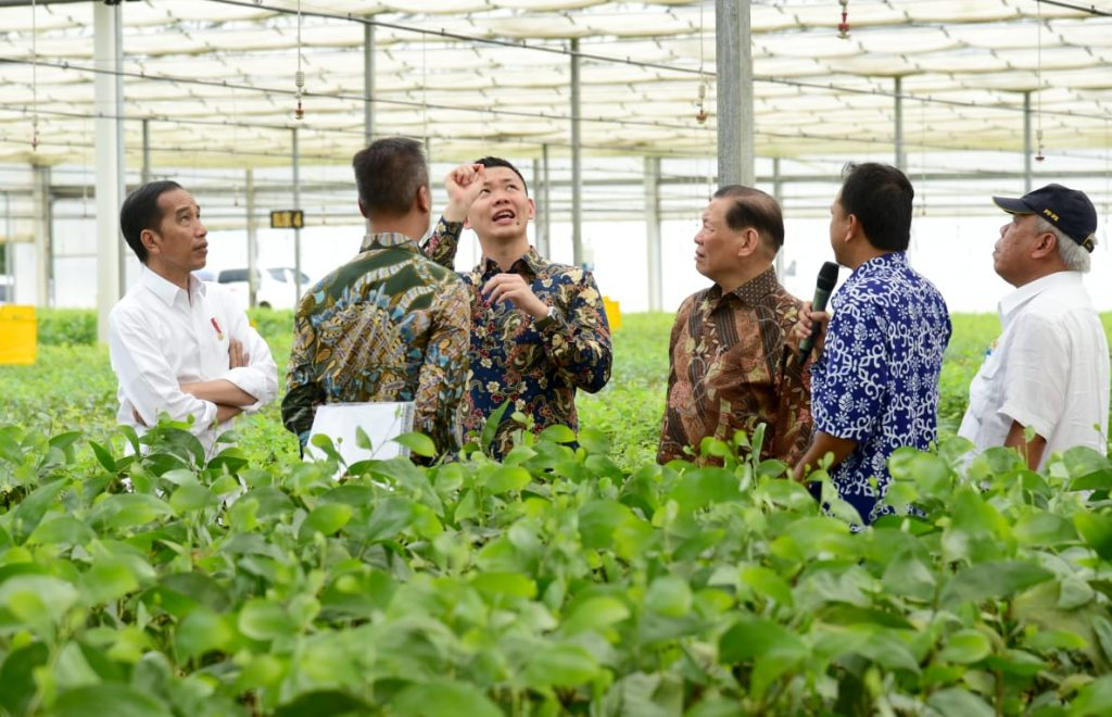 RGE Director Anderson Tanoto explains the workings of APRIL's nurseries to Indonesia President Jokowi.