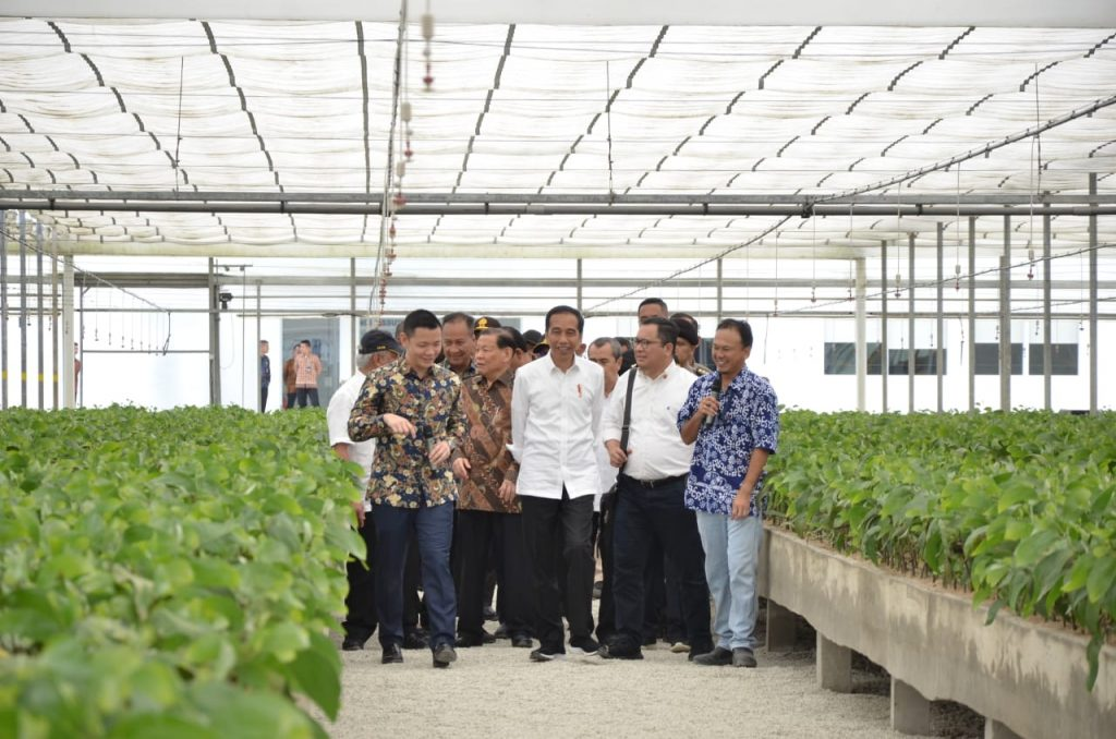 President Jokowi tours APRIL PT RAPP nursery with Anderson Tanoto and Sukanto Tanoto